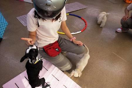 010sakura.jpg