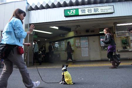 011sakura.jpg