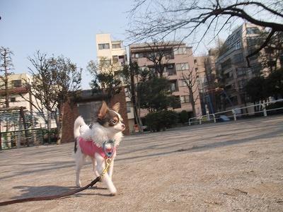 k-mirimoko110326a.jpg