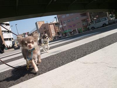 k-mirimoko110329.jpg