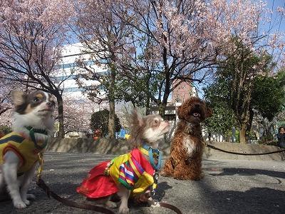 k-mirimoko110407.jpg