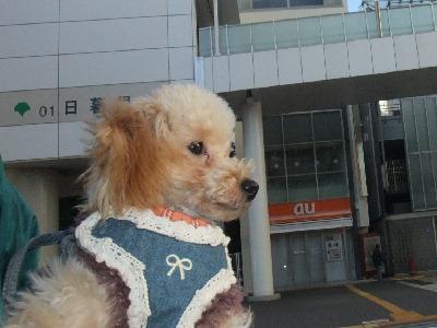 m-yoshiki120129.jpg