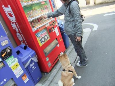y-mamekoro0306.jpg