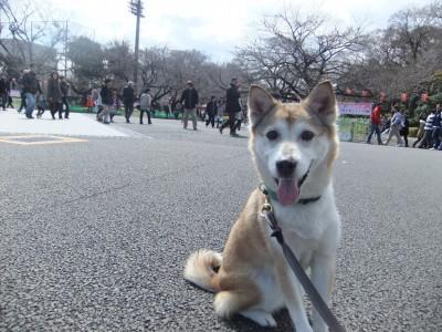 y-mamekoro0321.jpg