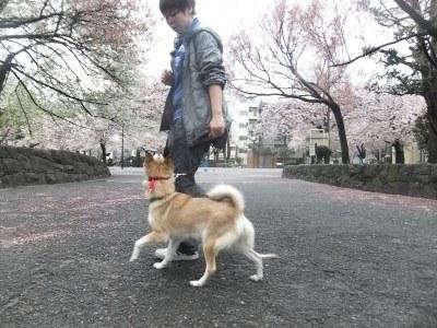 y-mamekoro0404.jpg
