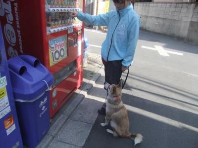 y-mamekoro0412.jpg