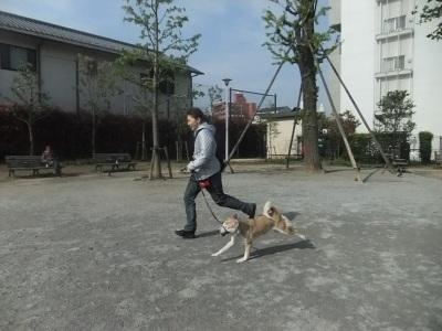 y-mamekoro0421.jpg