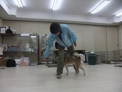 y-mamekoro0424.jpg