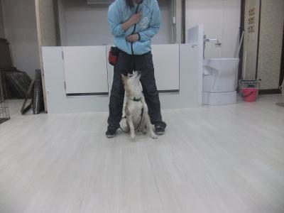 y-mamekoro0425.jpg