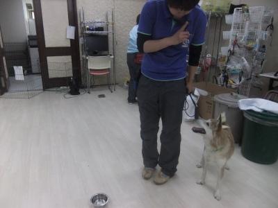 y-mamekoro0429.jpg