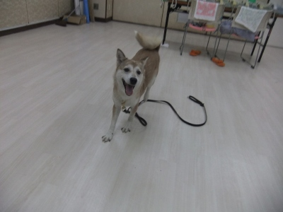 y-mamekoro0430.jpg