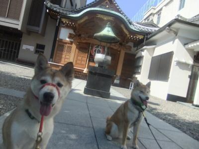 y-mamekoro0502.jpg
