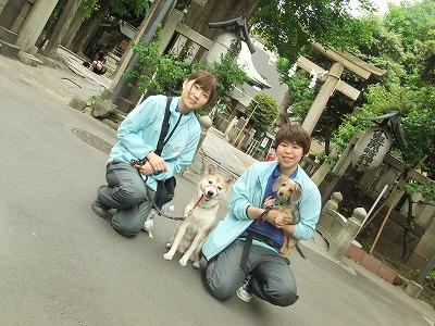 y-mamekoro0505.jpg