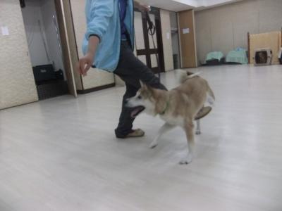 y-mamekoro0509.jpg