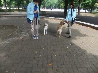 y-mamekoro0514.jpg