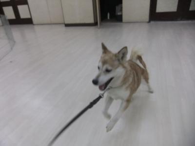 y-mamekoro0516-2.jpg