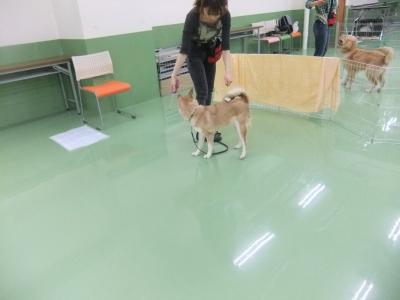 y-mamekoro0517-2.jpg