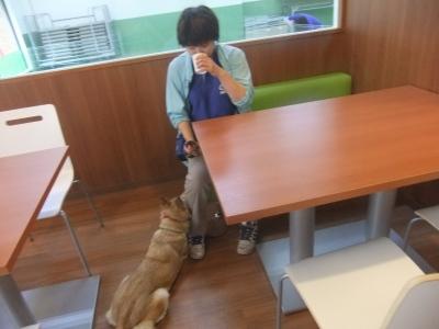y-mamekoro0518.jpg