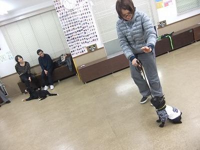 y-umi1201143.jpg