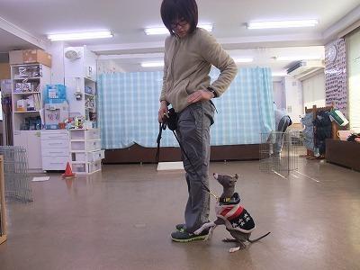 d-kuru-ku110223.jpg