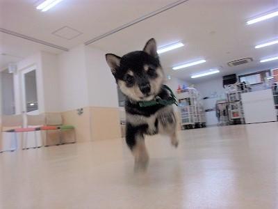 h-akiba0815.jpg