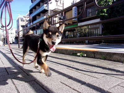 h-akiba1108.jpg