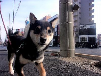 h-akiba1118.jpg
