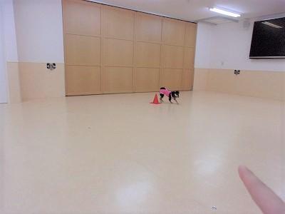 h-akiba1206.jpg
