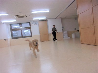 i-tonko0810.jpg