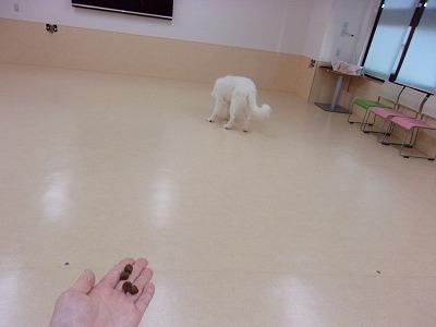 k-noarabu0621.jpg